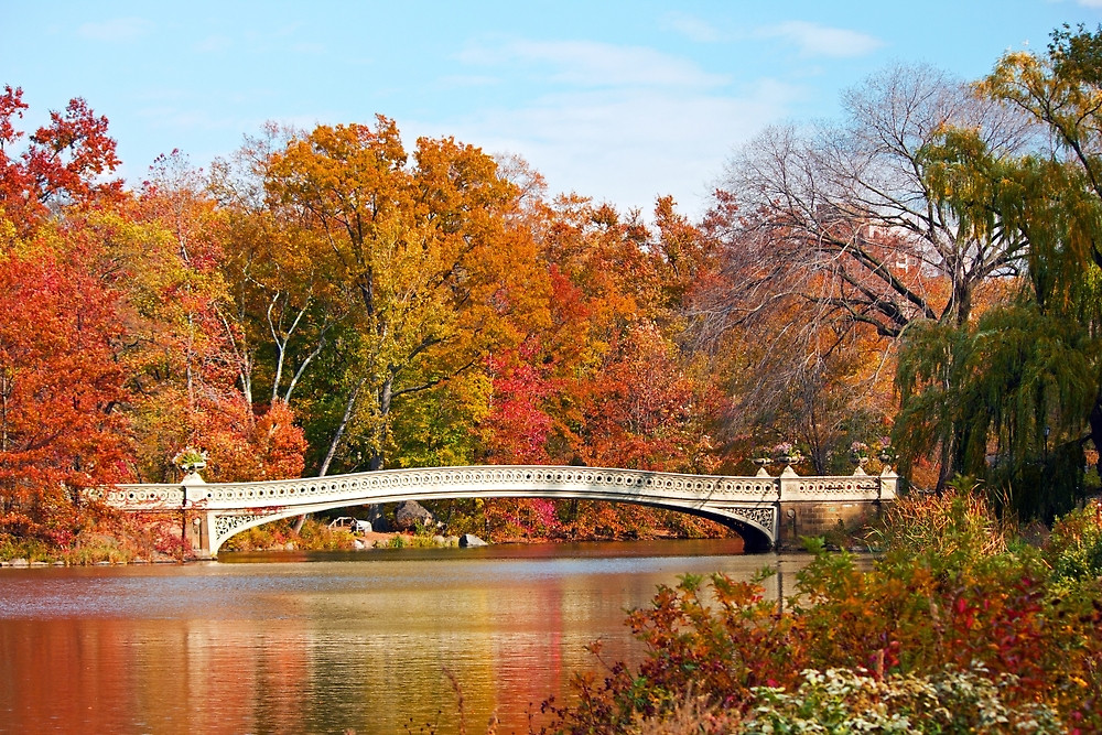 Bow Bridge in Autumn