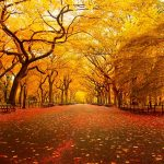 5 Places To Visit In New York City This Autumn