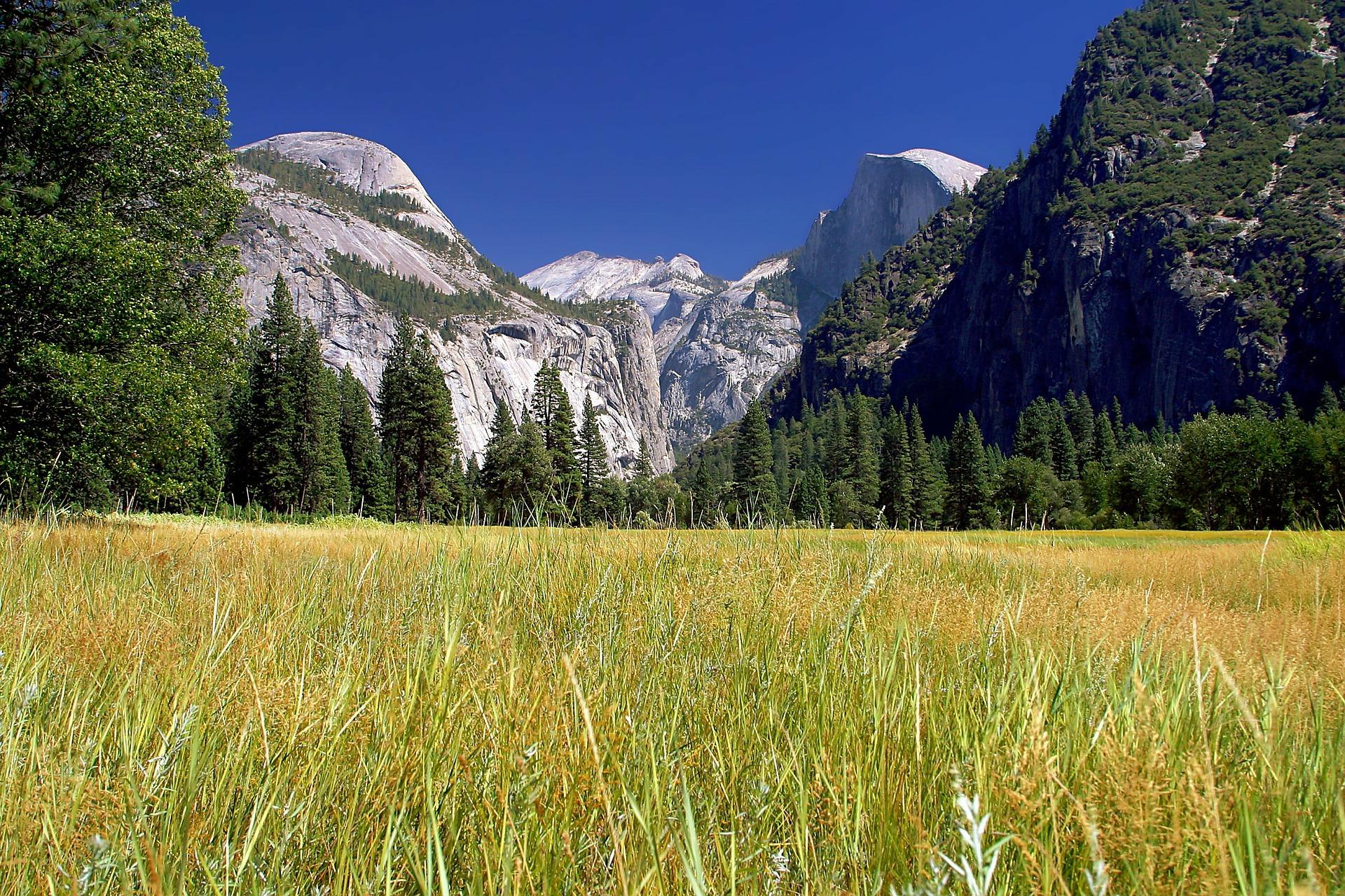 Yosemite National Park Meadow