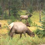Canadian Tour 2017: Day 7 – Jasper National Park