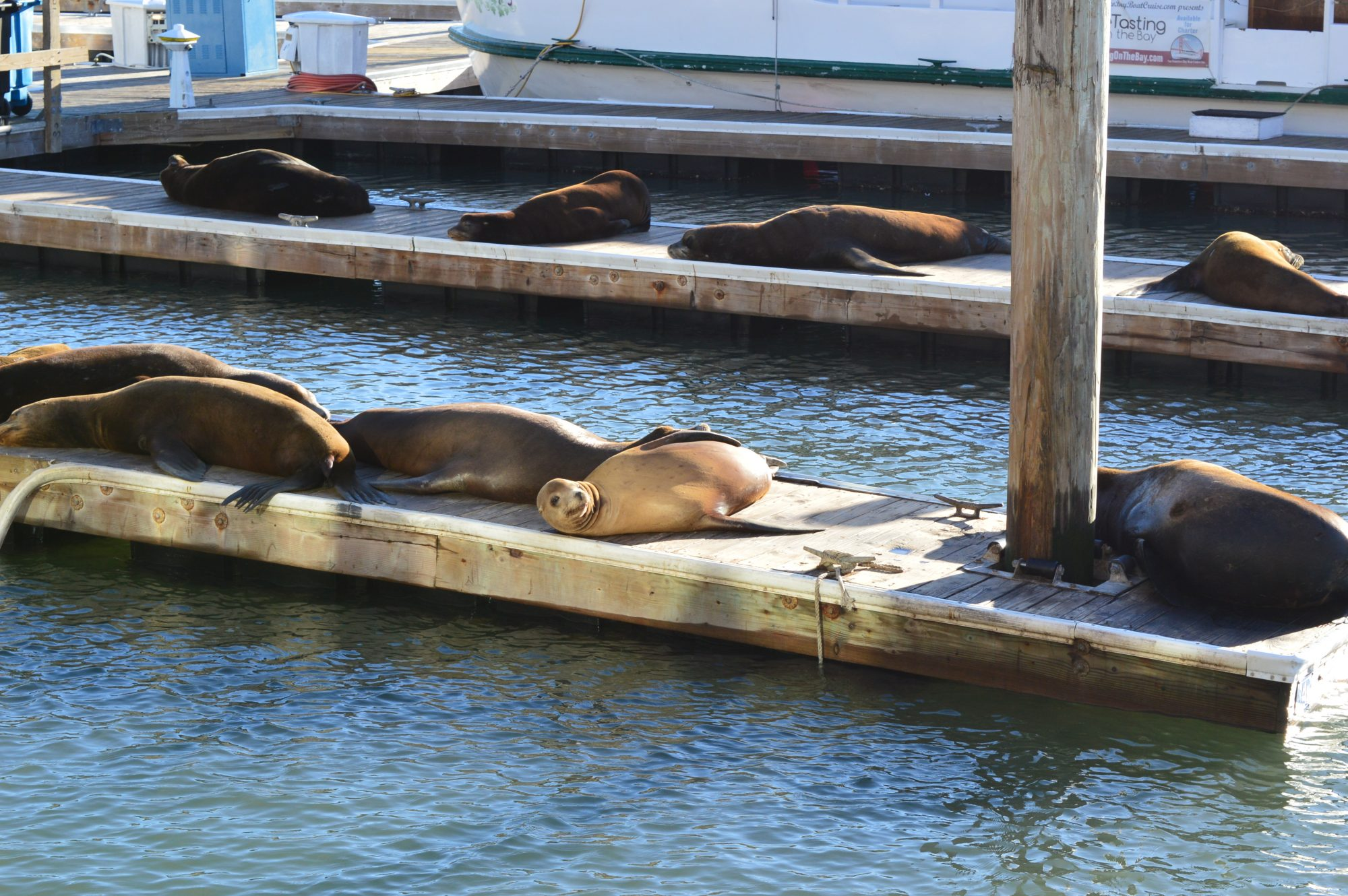 Sea lions at Pier 39 San Francisco