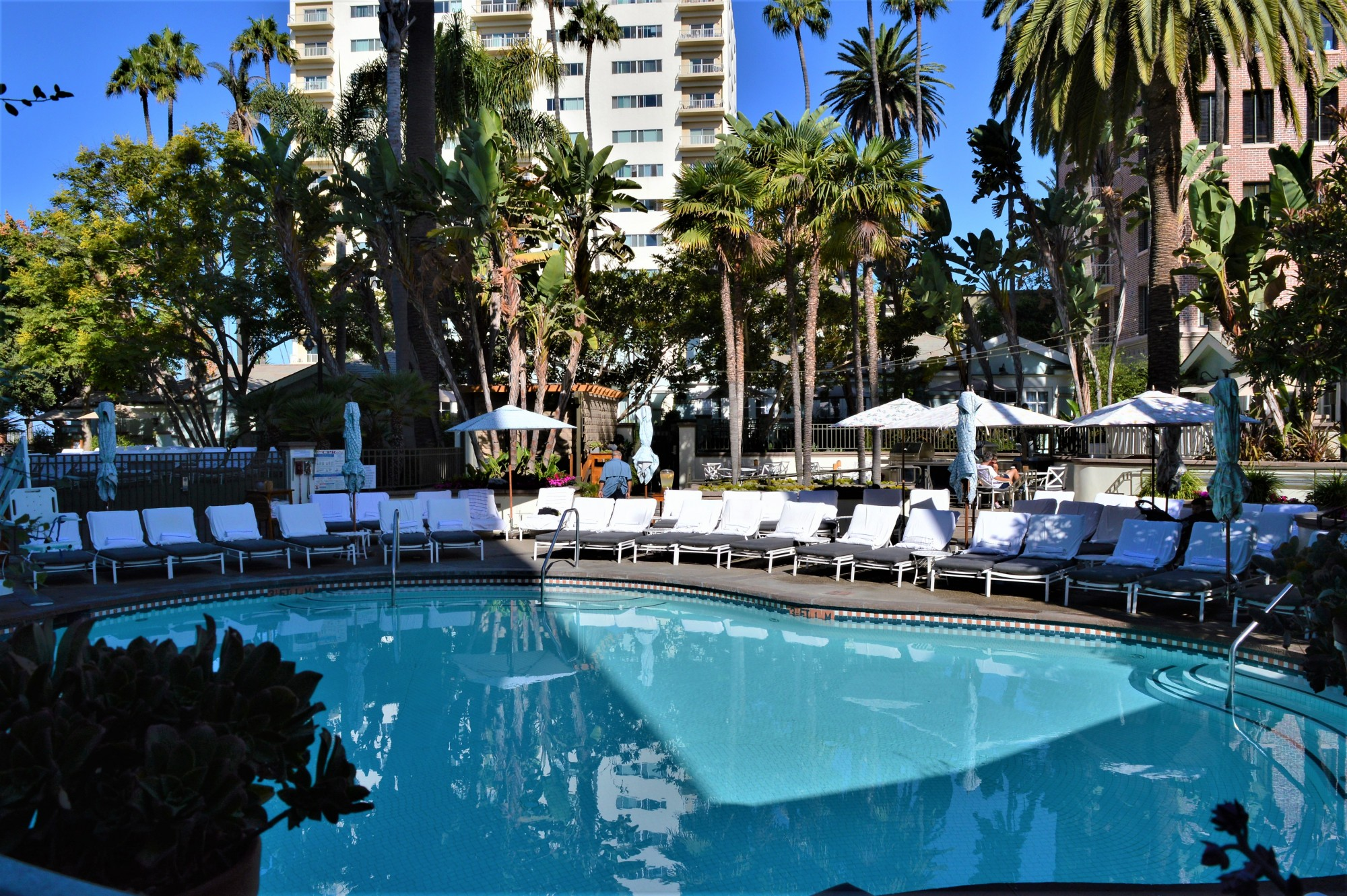 Fairmont Miramar Hotel & Bungalows Pool Santa Monica