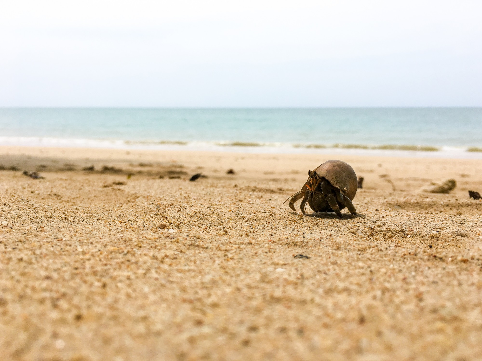 Hermit Crab at White Sand Beach (Ao Thong beach) in Khao Lak