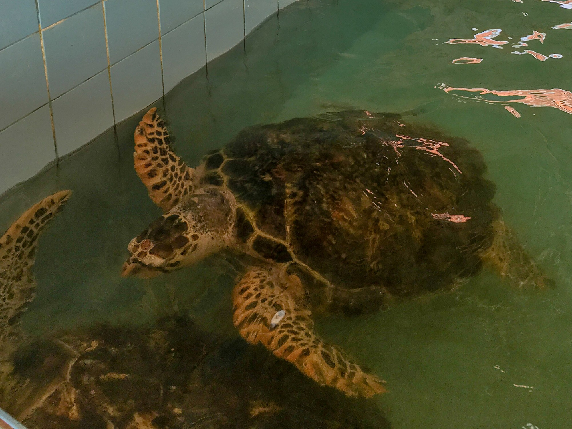 Sea Turtle Sanctuary, Khao Lak