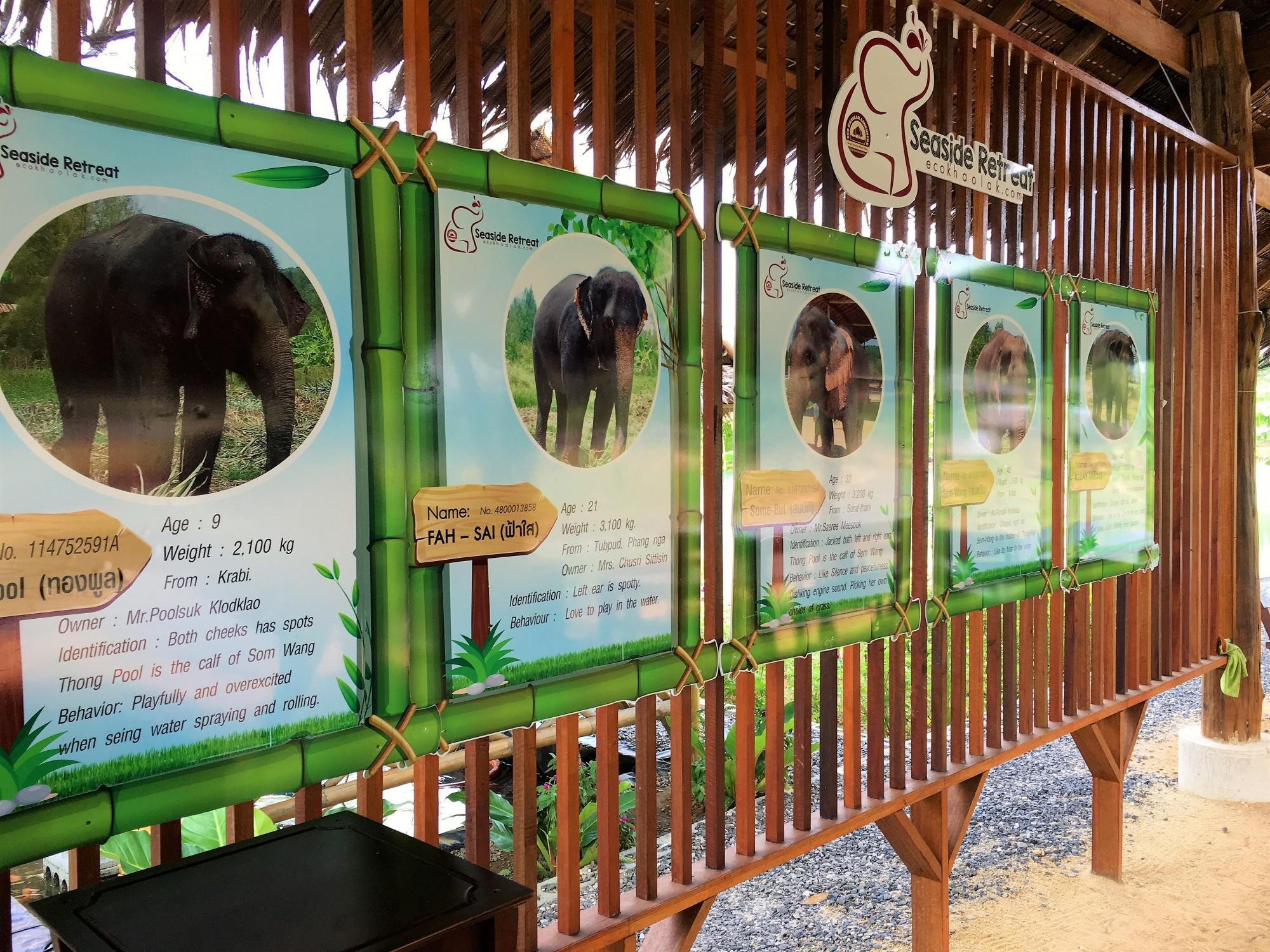 The Seaside Retreat Elephant Trip Khao Lak Thailand