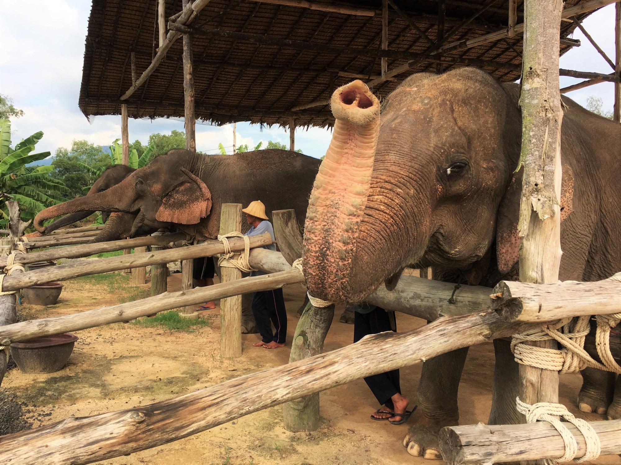 The Seaside Retreat Elephant Feeding, Khao Lak, Thailand