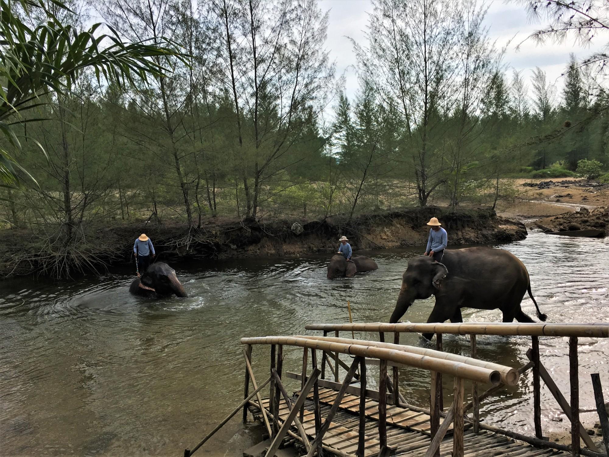 The Seaside Retreat Elephants in the river, Khao Lak, Thailand