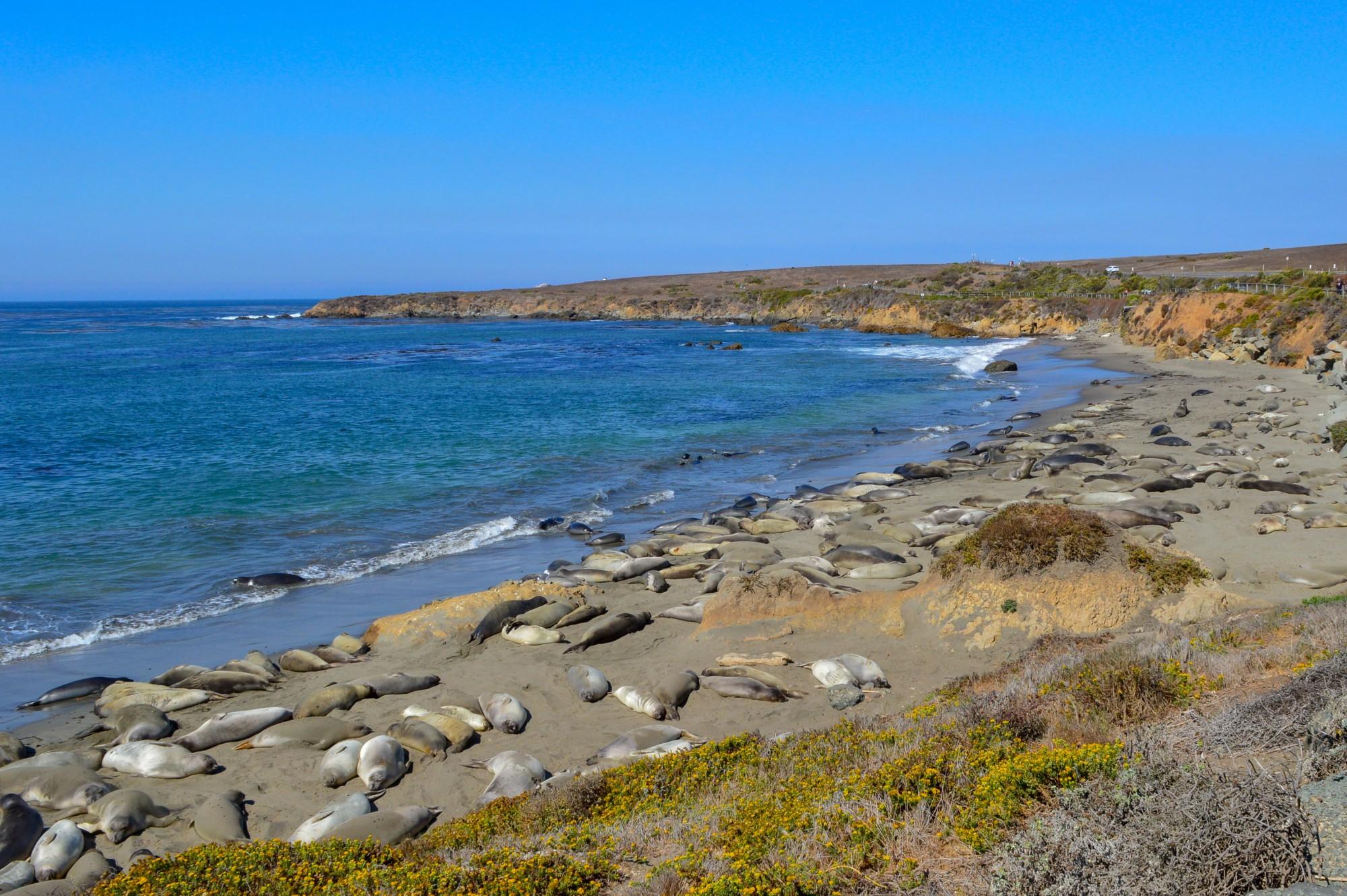 Piedras Blancas Elephant Seal Rookery, San Simeon