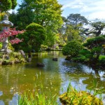Exploring the Japanese Garden in the Golden Gate Park, San Francisco