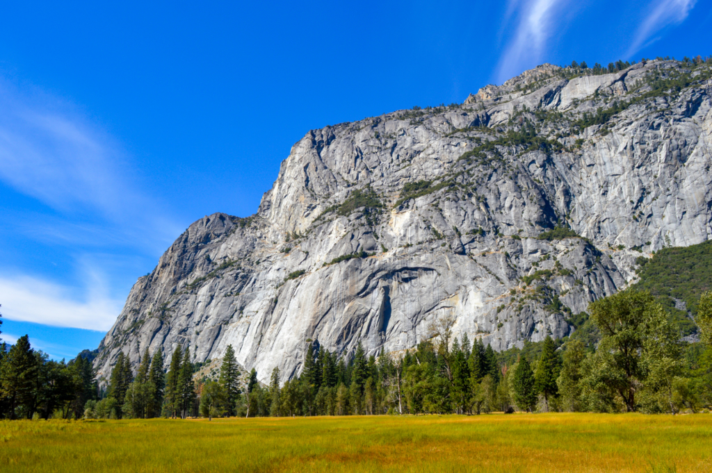 Yosemite Meadow