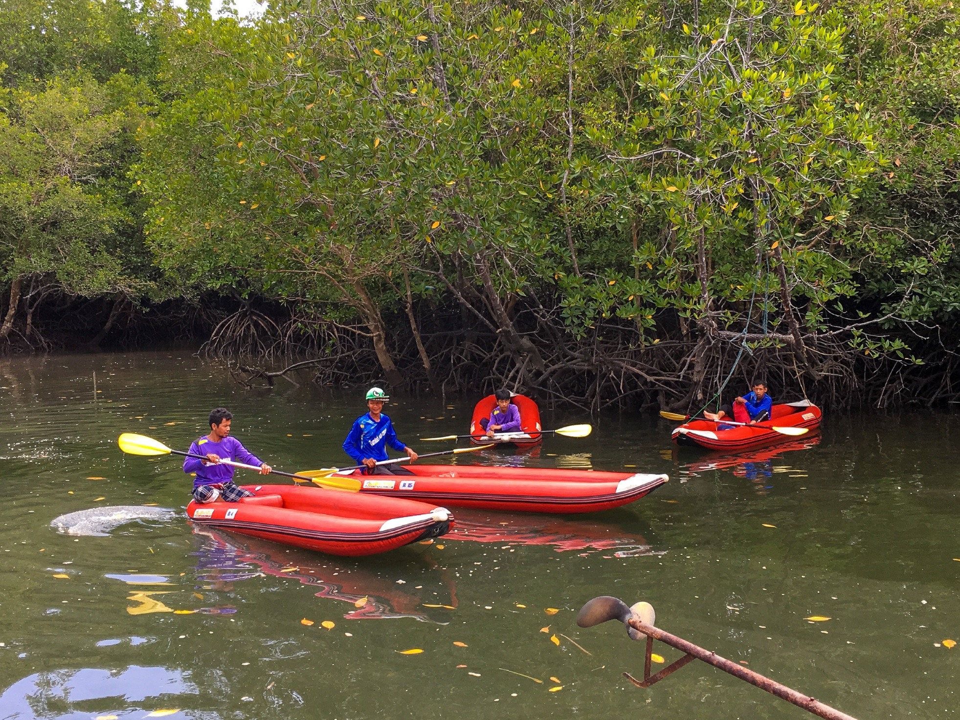 Canoeing At The Mangrove Swamp, Phang Nga Bay