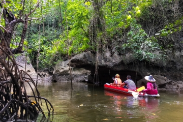 The Mangrove Swamp And Mangrove Cave In Phang Nga Bay